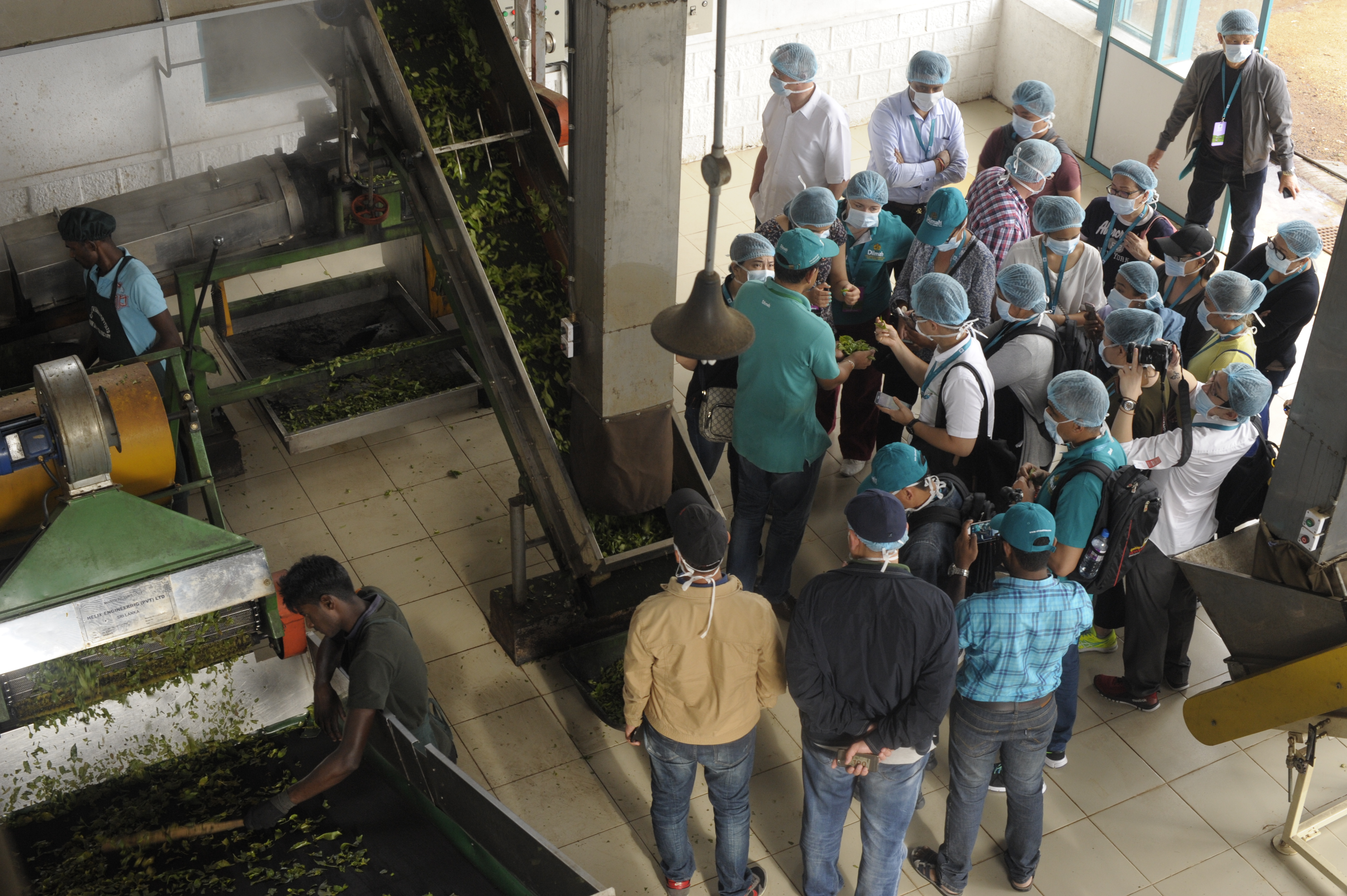 Witnessing & explaing the green tea manufacturing