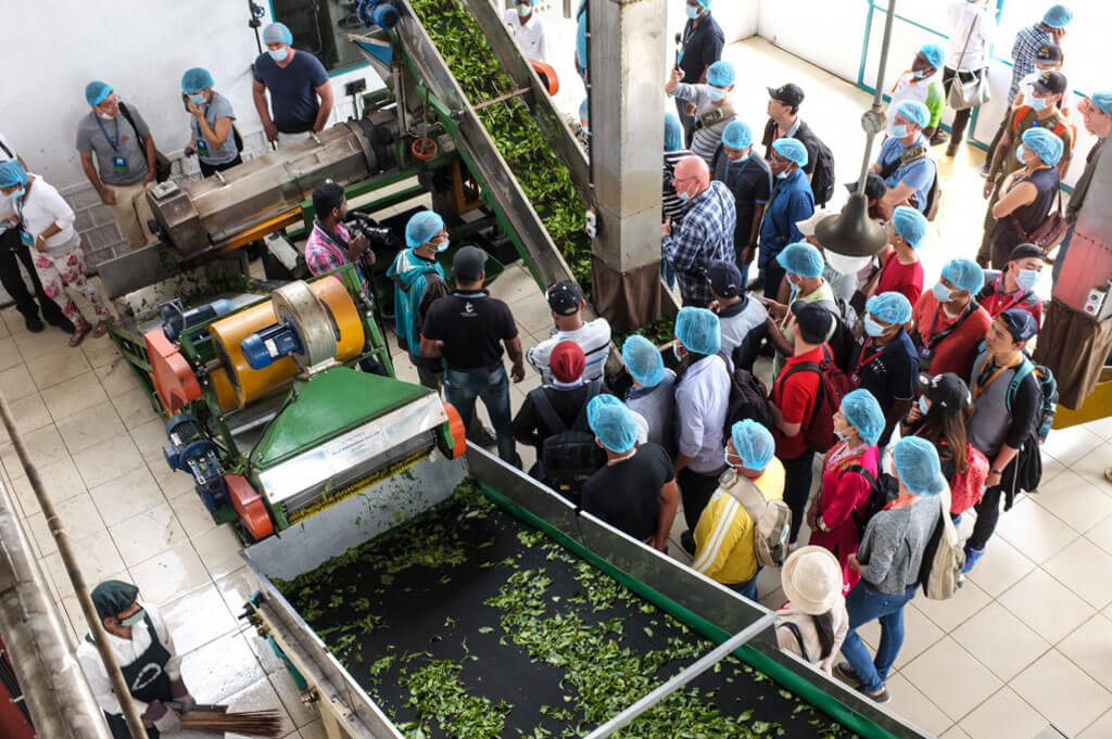 Dilmah School of Tea 2015, Sri Lanka - Session 2 - Visit to Park Green Tea Factory-02