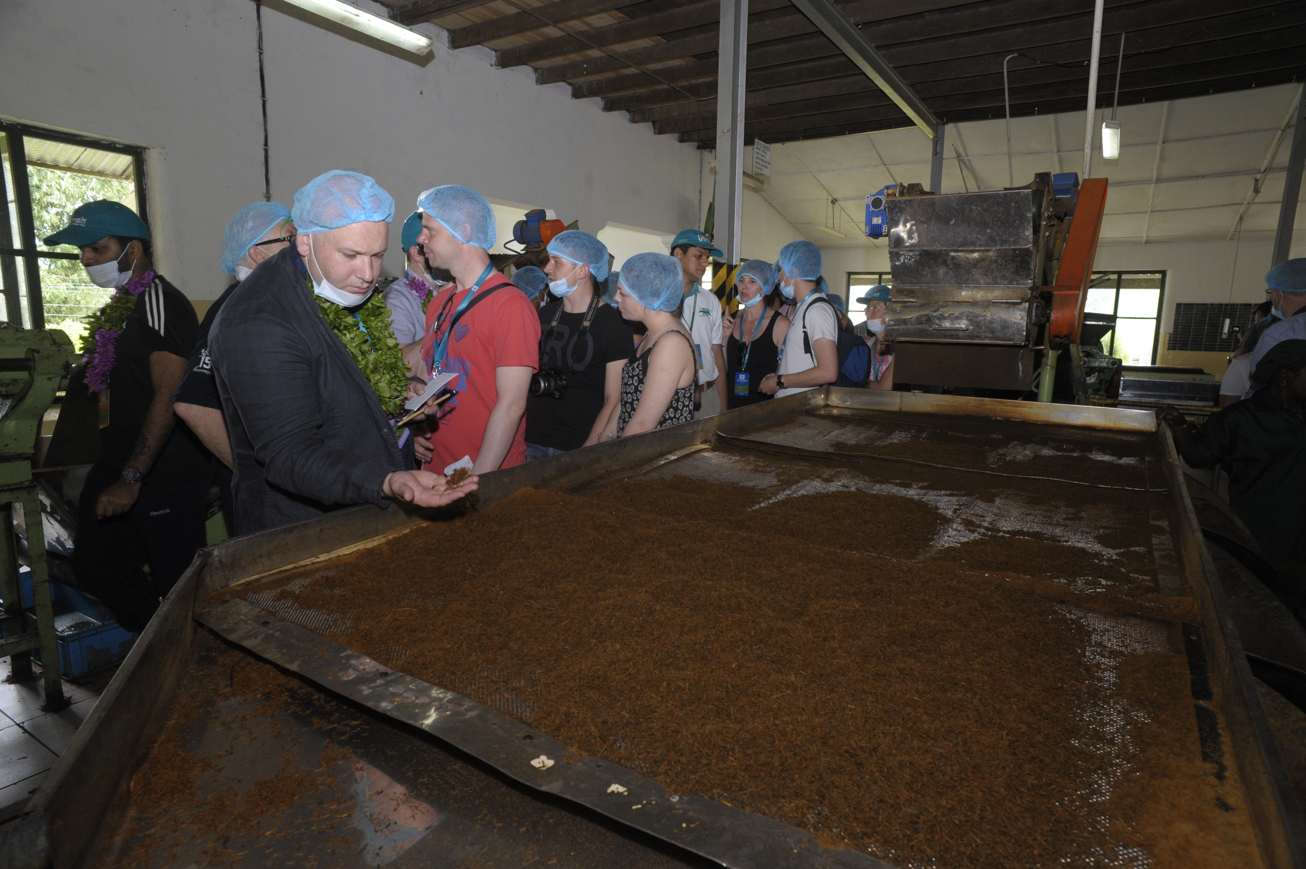 Sorting & Grading of black tea
