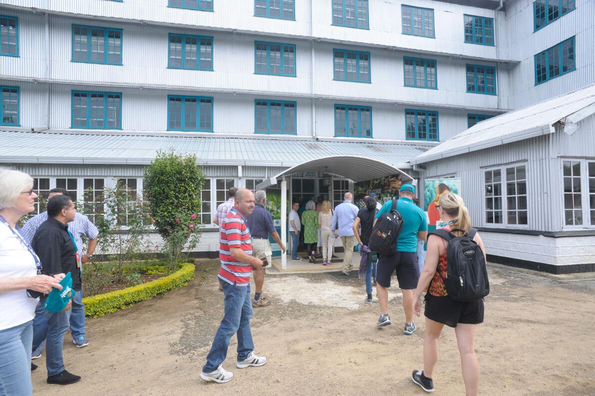 Group entering Green tea factory