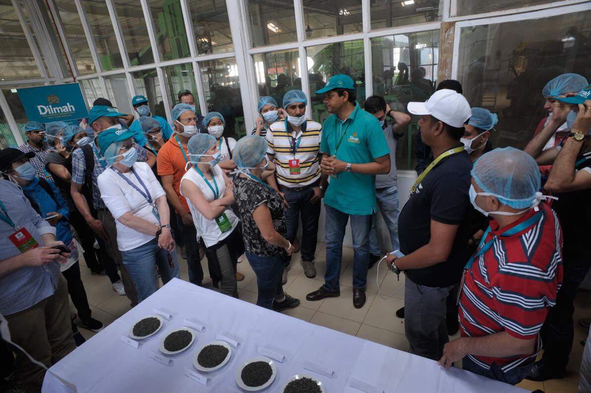 Buddika Weerasekara explaining the Green tea grades