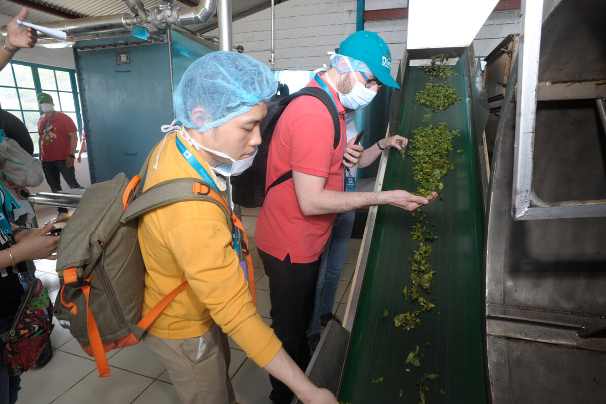 Witnessing the pre-drying process of Green tea