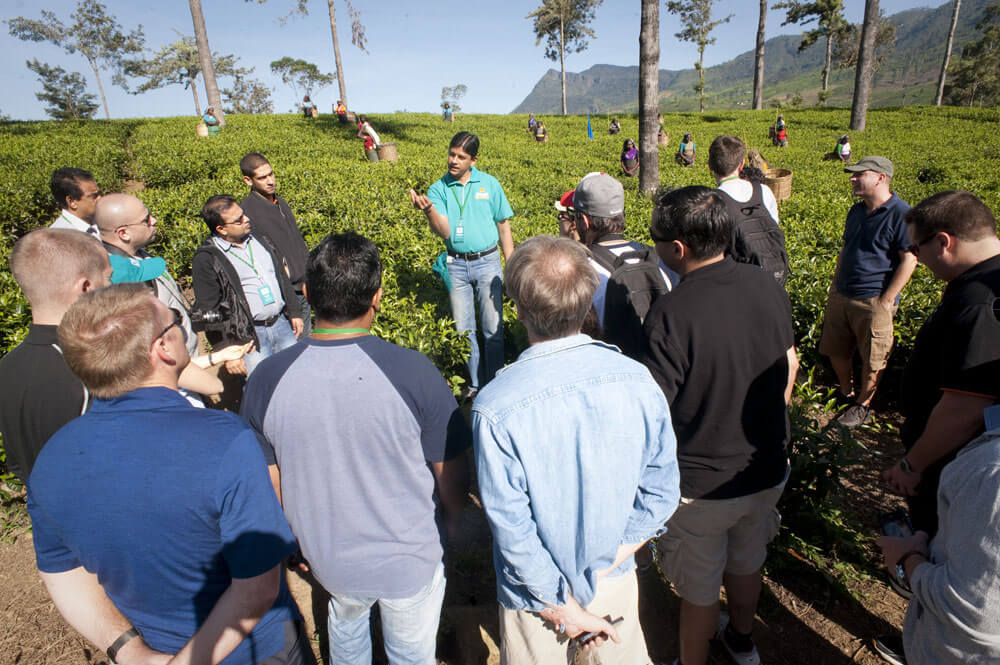 School of Tea 2013, Sri Lanka - Session 1 - Plantation Visit