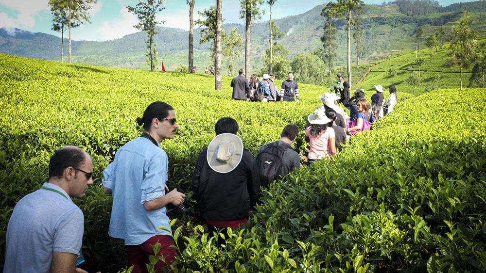 School of Tea 2013, Sri Lanka - Session 2 - Plantation Visit