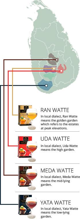 There are 4 tea growing regions in Sri Lanka, categorised based on elevation.