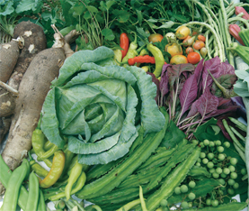 Encouraging Sustainable Agriculture