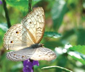Where Butterflies Dance…