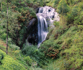 Creating Eco-friendly Tea Gardens